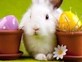 easter_rabbit